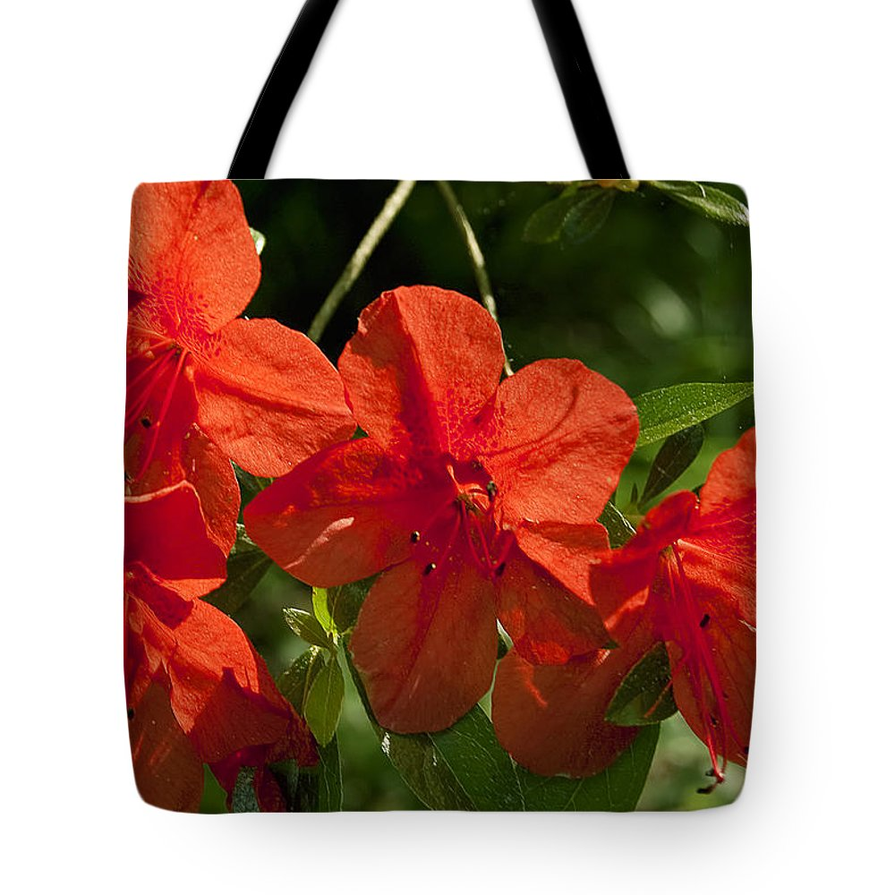 Flowers Tote Bag featuring the photograph Pretty In Red by Gary Adkins