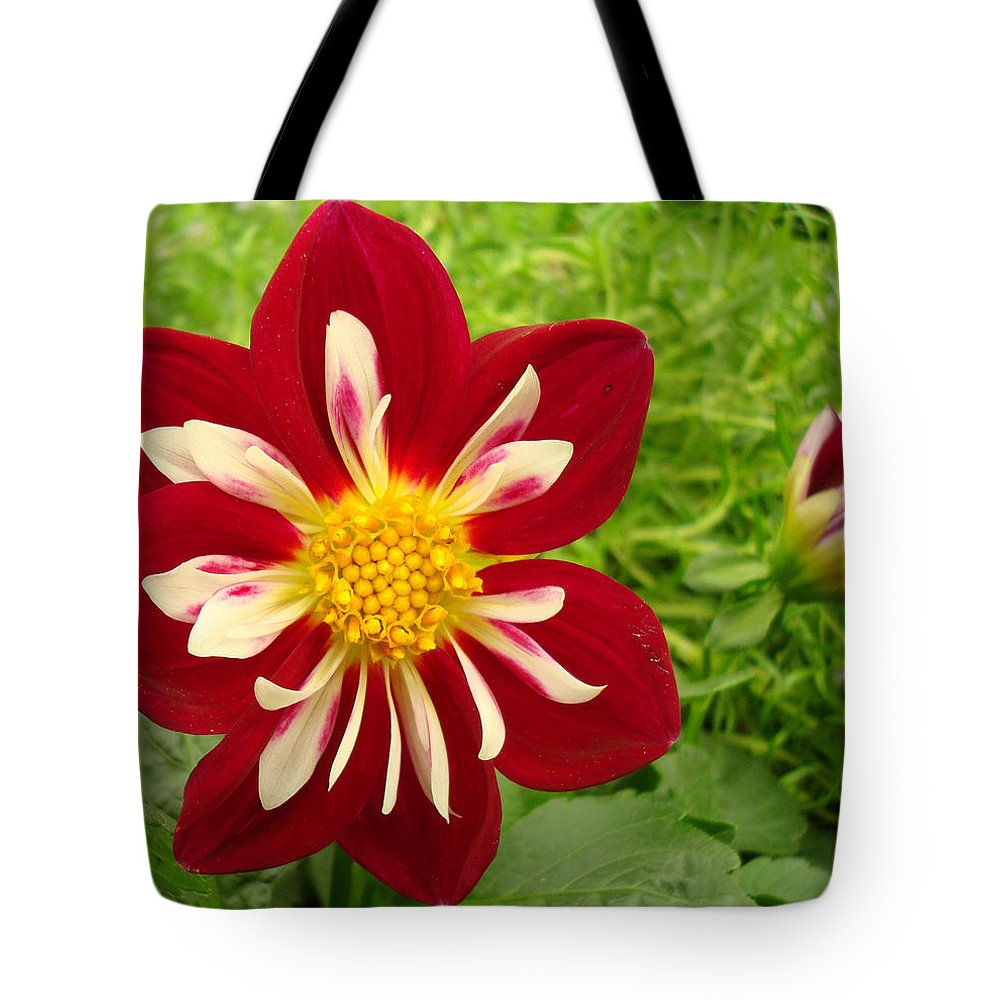 Kathy Bucari Tote Bag featuring the photograph Pretty In Red by Kathy Bucari