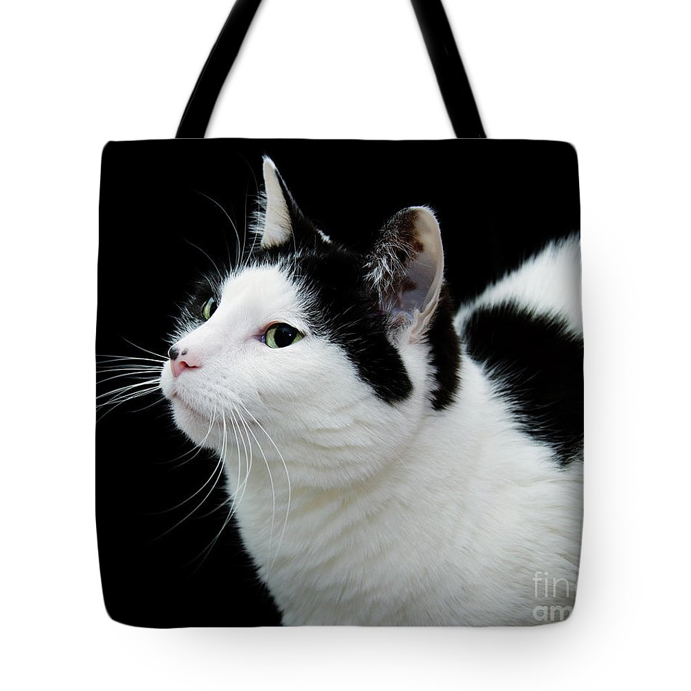 Fine Art Cat Tote Bag featuring the photograph Pretty Kitty Cat 2 by Andee Design