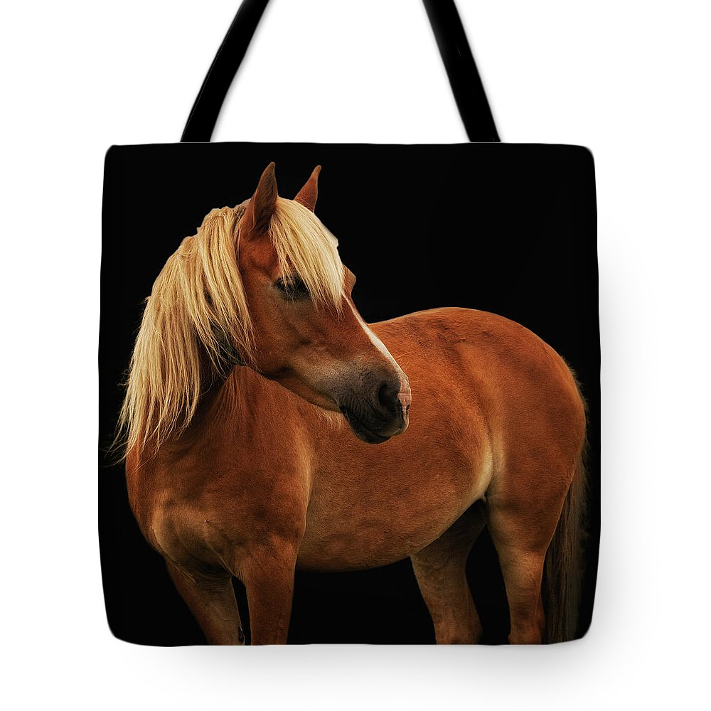 Palomino Ponies Tote Bag featuring the photograph Pretty Palomino Pony by Habile Photography