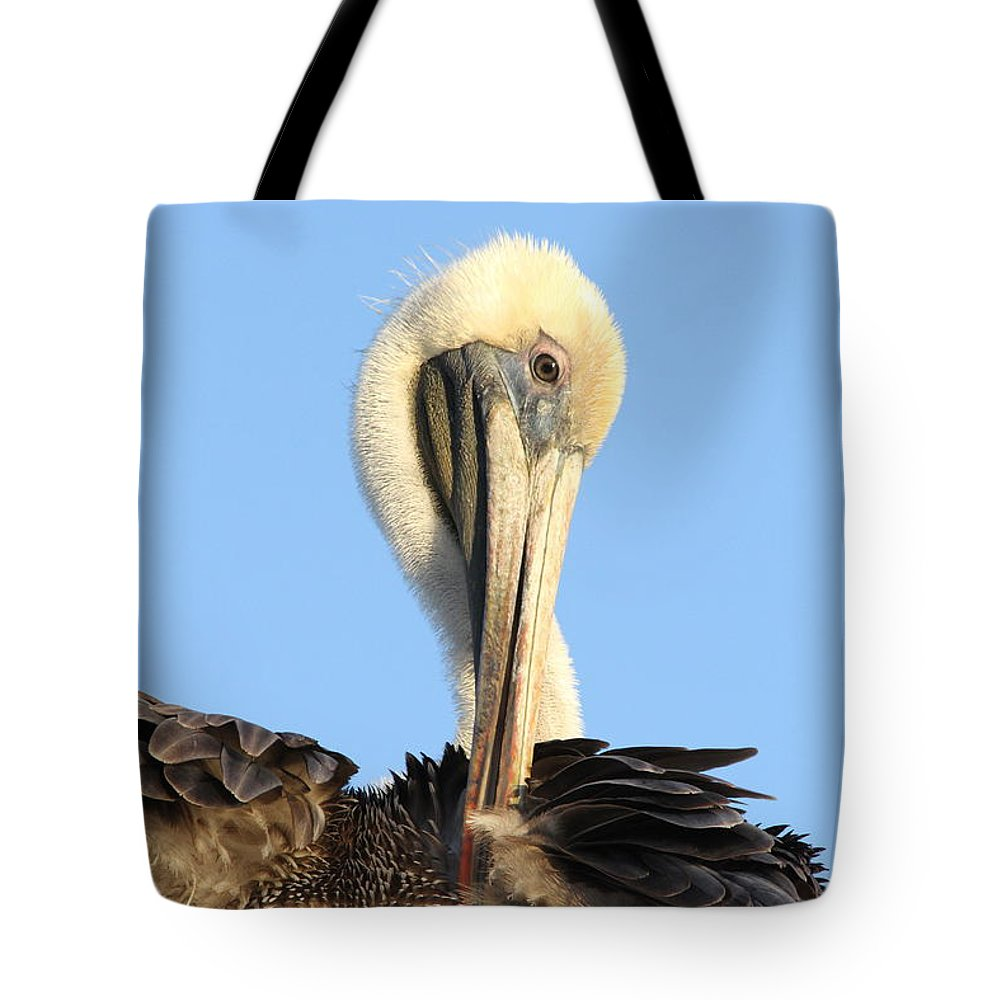 Pelican Tote Bag featuring the photograph Pretty Pelican by Jim Clark