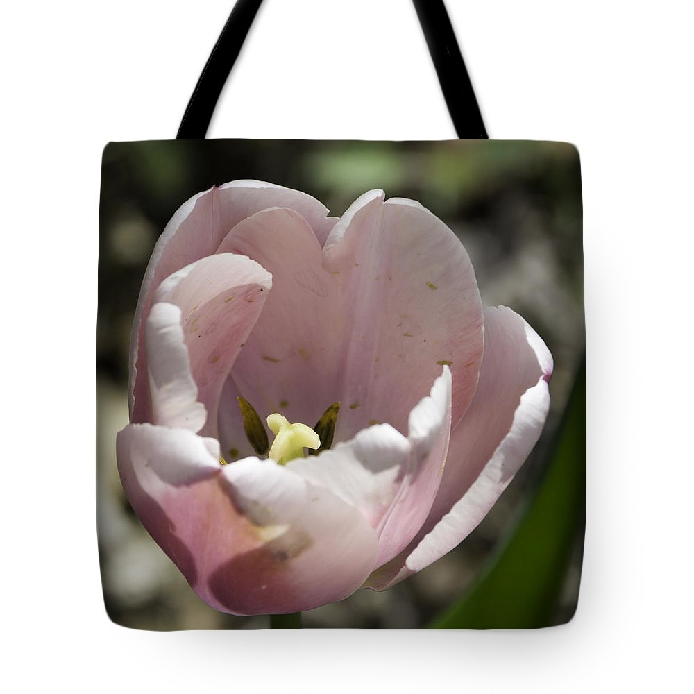 Flowers Tote Bag featuring the photograph Pretty Pink Tulip Squared by Teresa Mucha