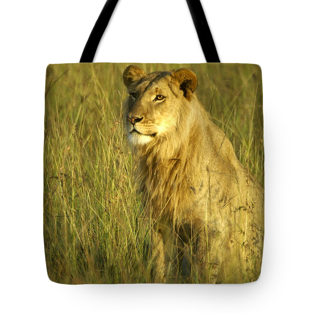 Africa Tote Bag featuring the photograph Princely Lion by Michele Burgess