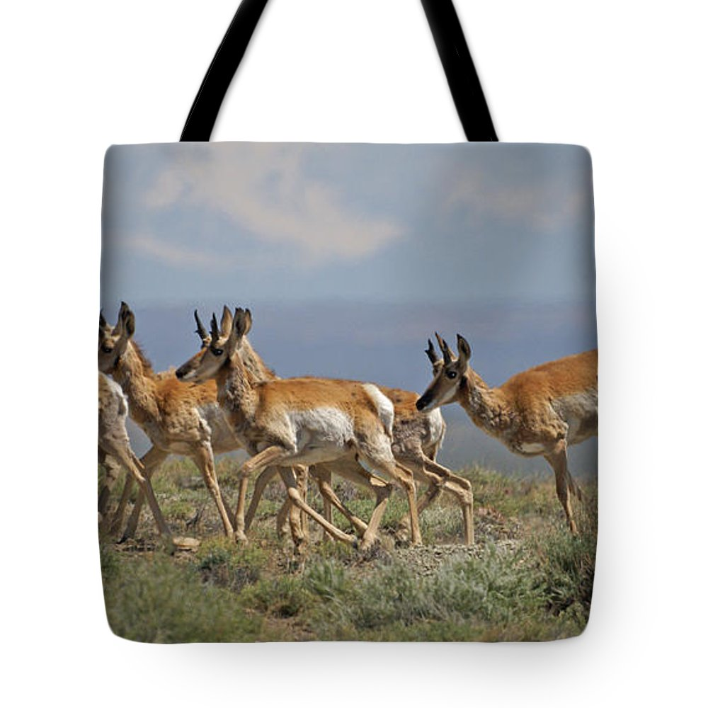Pronghorn Tote Bag featuring the photograph Pronghorn Antelope Running by Heather Coen