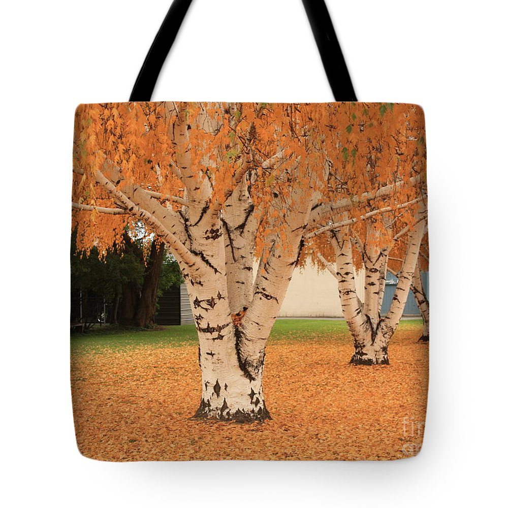 Autumn Landscape Tote Bag featuring the photograph Prosser - Autumn Birch Trees by Carol Groenen
