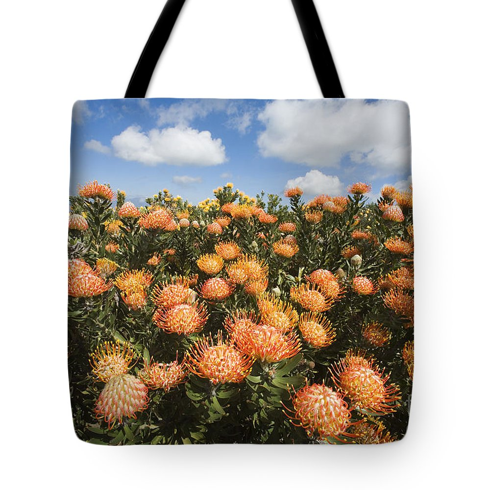 Afternoon Tote Bag featuring the photograph Protea Blossoms by Ron Dahlquist - Printscapes
