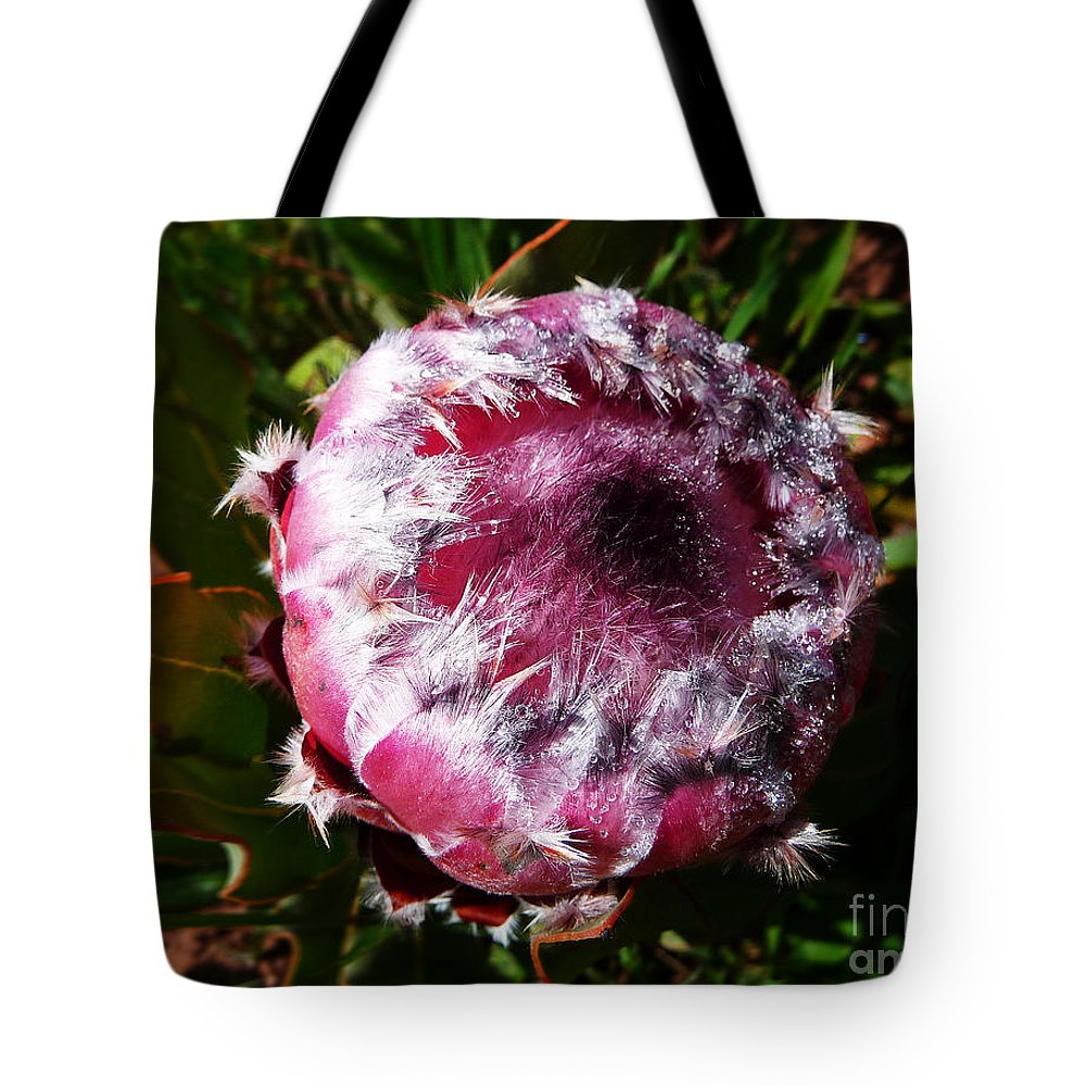 Africa Tote Bag featuring the photograph Protea Flower 1 by Xueling Zou