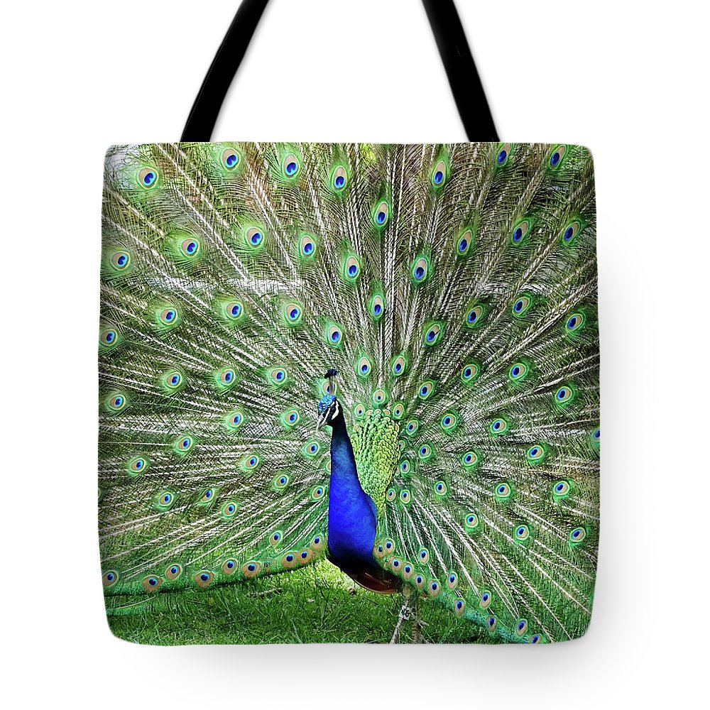 Bird Tote Bag featuring the photograph Proud Peacock by Deborah England