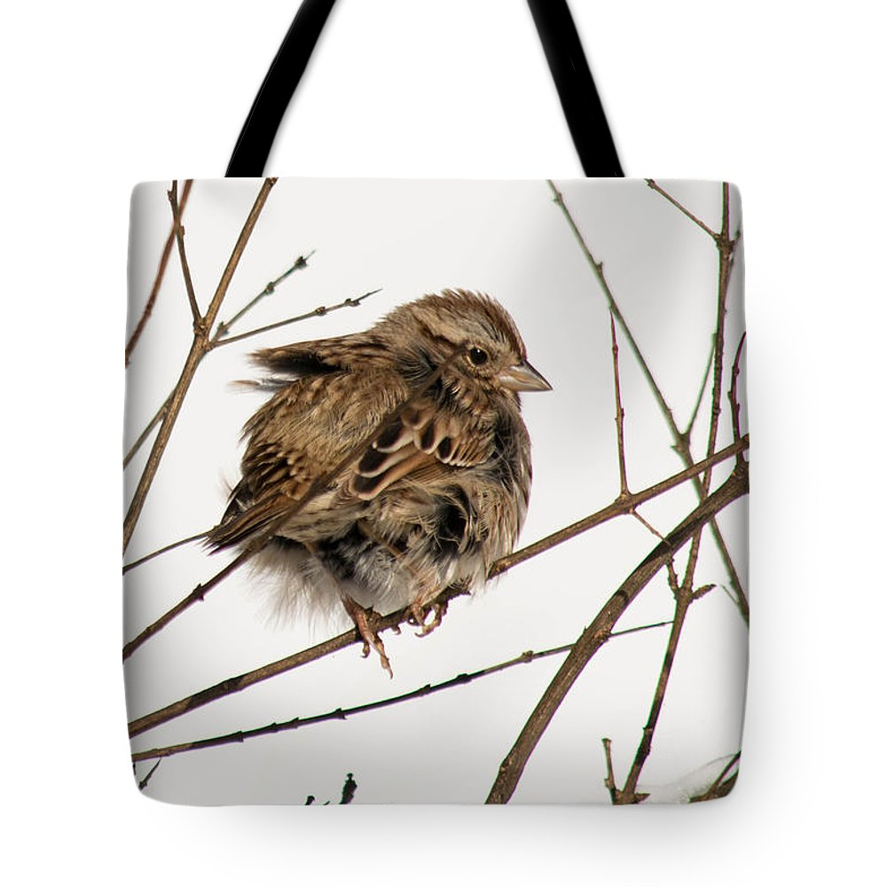 Field Sparrow Tote Bag featuring the photograph Puffed Up by Nancy Comley