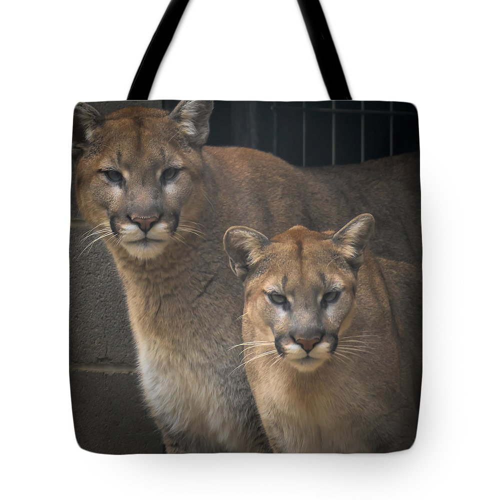 Fine Art Tote Bag featuring the photograph Puma Pair by David Pine