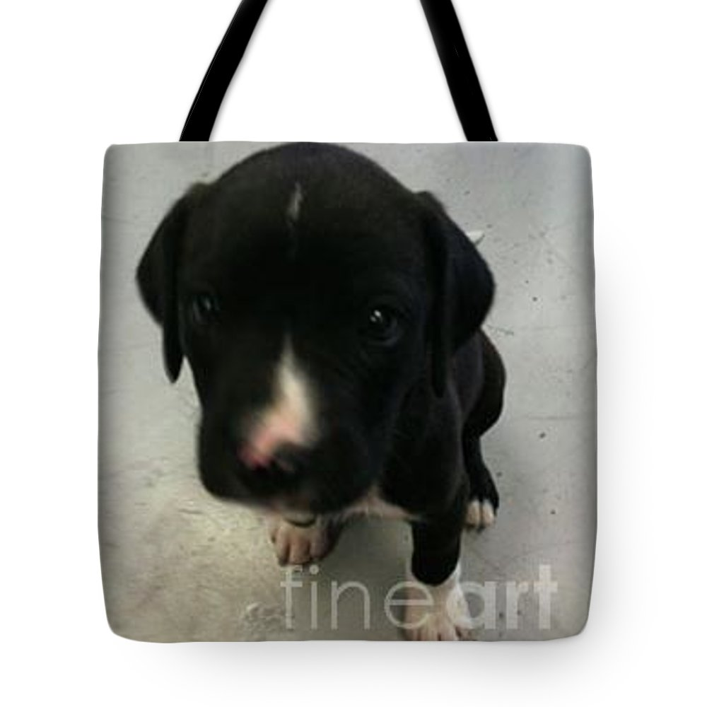 Puppy Tote Bag featuring the photograph Puppy Love by Joseph Kelly