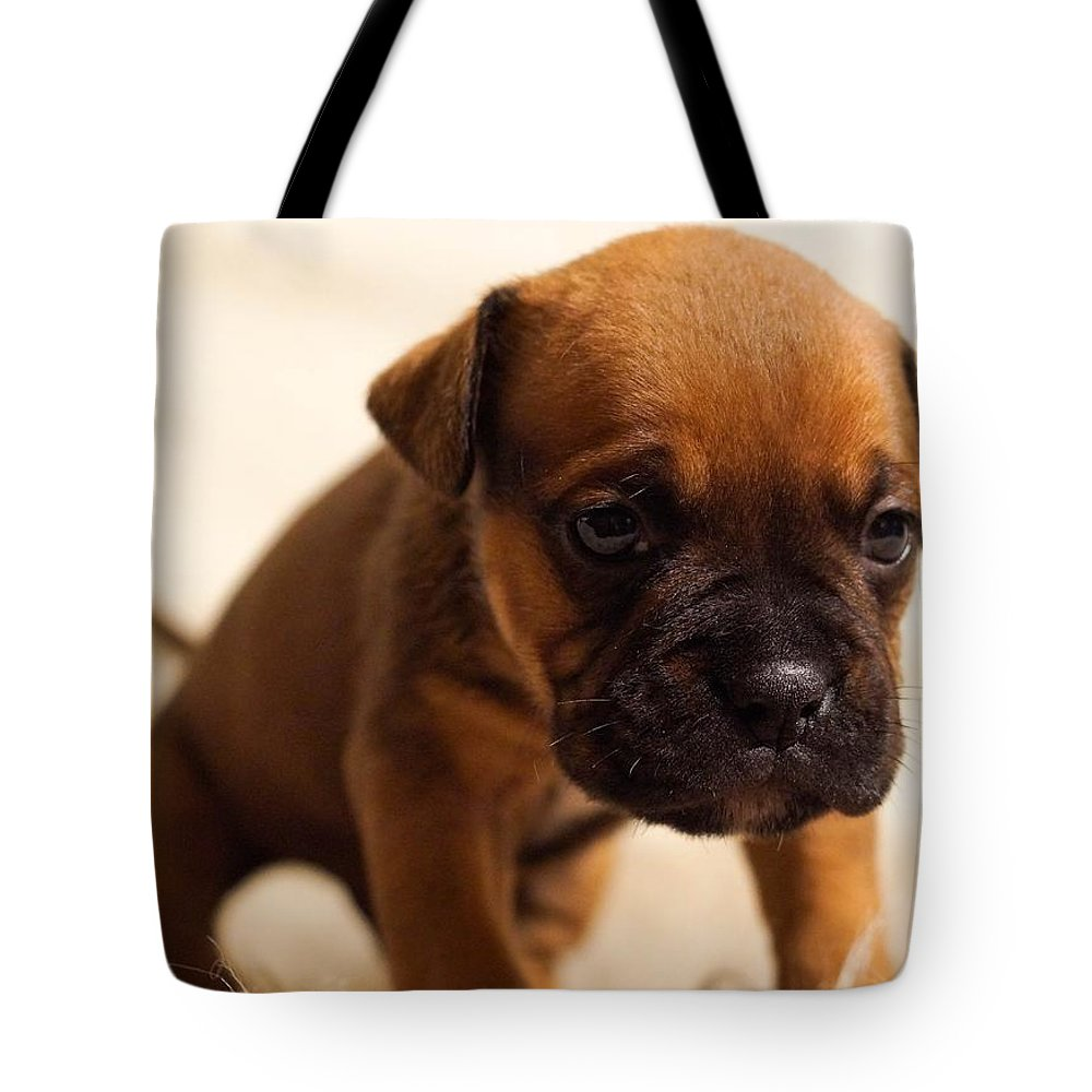 Tote Bag featuring the photograph Puppy by Siobhan May