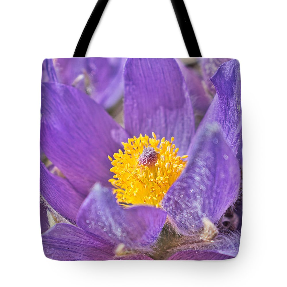 Pasqueflower Tote Bag featuring the photograph Purple And Gold - Bright by Cathy Mahnke