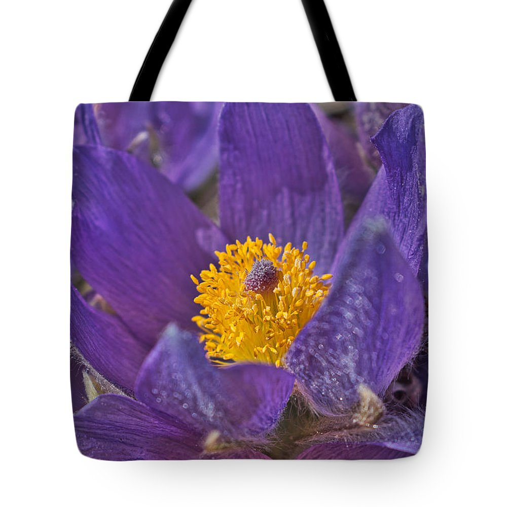 Pasqueflower Tote Bag featuring the photograph Purple And Gold by Cathy Mahnke