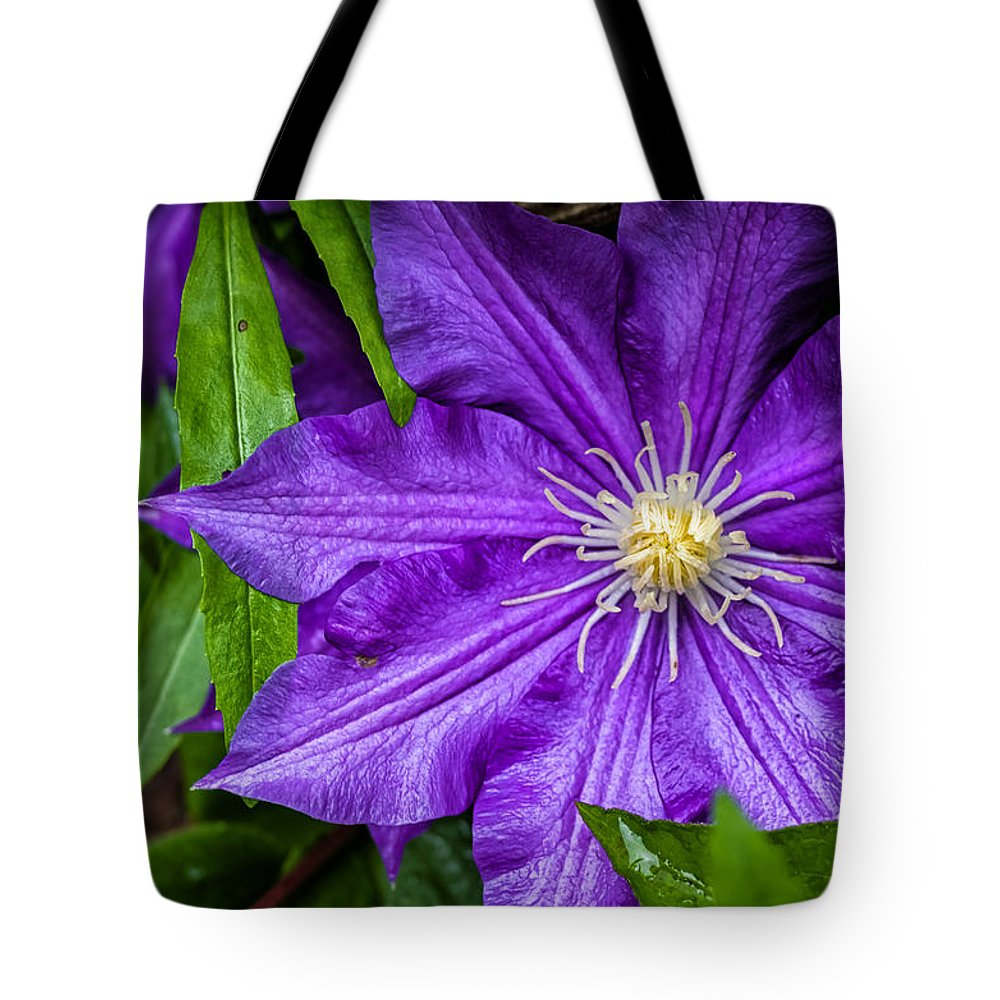 Fa 31 Tote Bag featuring the photograph Purple Clematis by Lori Coleman