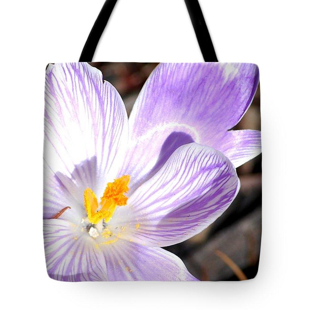 Purple Crocus Tote Bag featuring the photograph Purple Crocus by Carol Deltoro