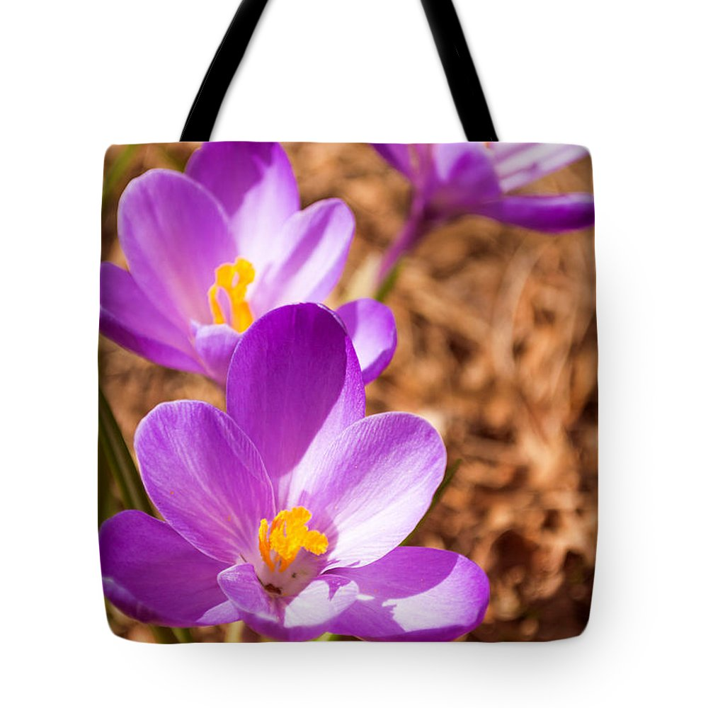 Purple Tote Bag featuring the photograph Purple Crocus by James Meyer