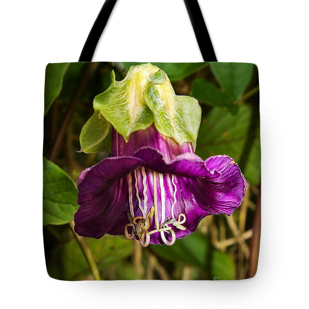Flower Tote Bag featuring the photograph Purple Flower Of The Vine Known As Cathedral Bells by Louise Heusinkveld