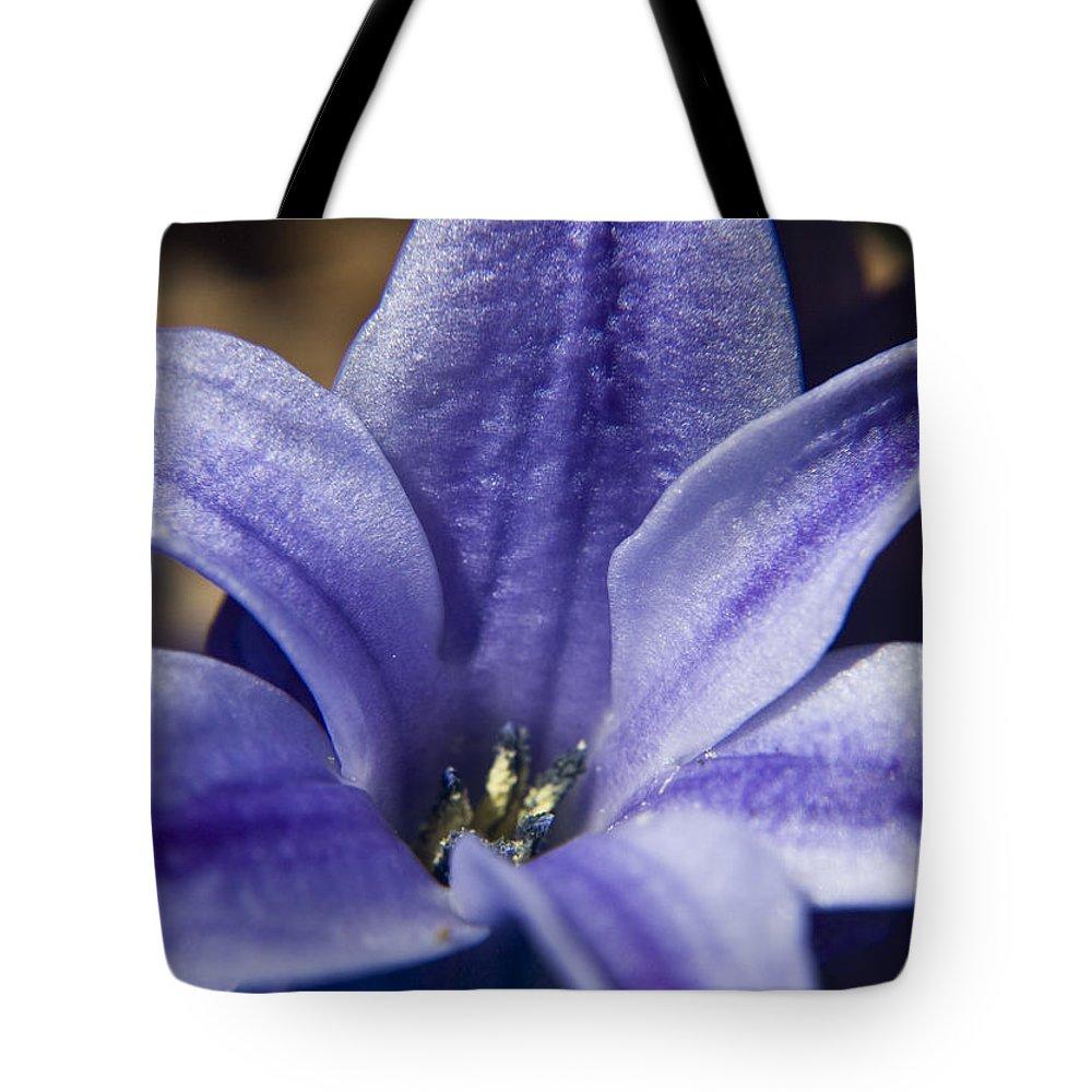 Hyacinth Tote Bag featuring the photograph Purple Hyacinth by Teresa Mucha