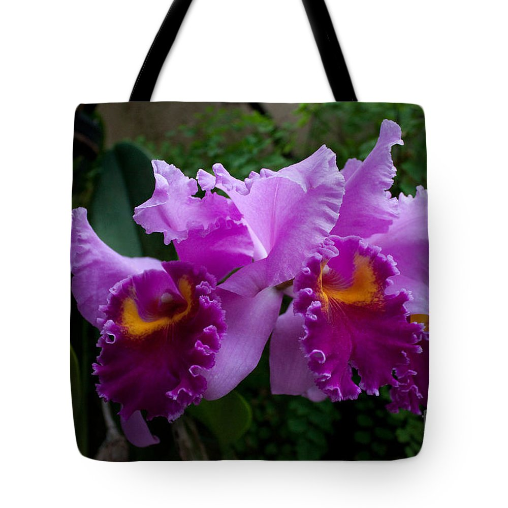 Plant Tote Bag featuring the photograph Purple Orchids by Robert Sander