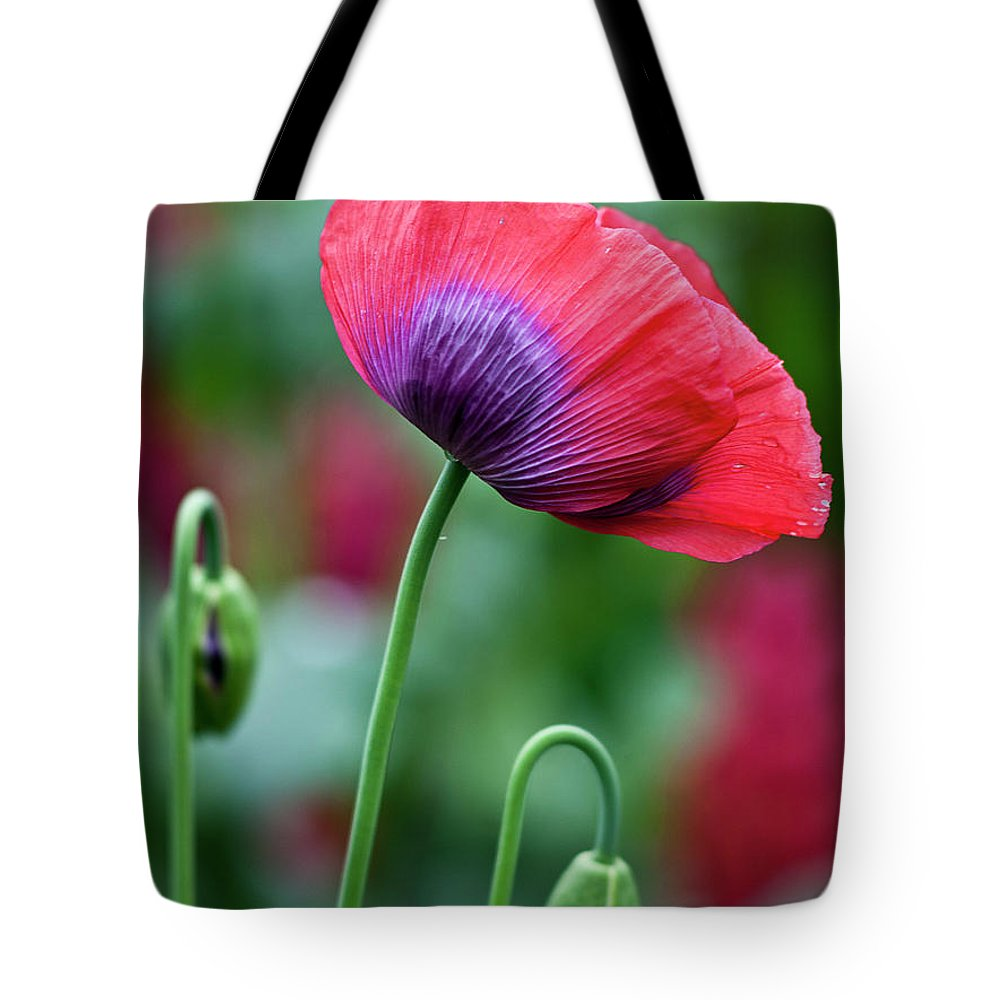 Poppy Tote Bag featuring the photograph Purple Poppy Flower by Heiko Koehrer-Wagner