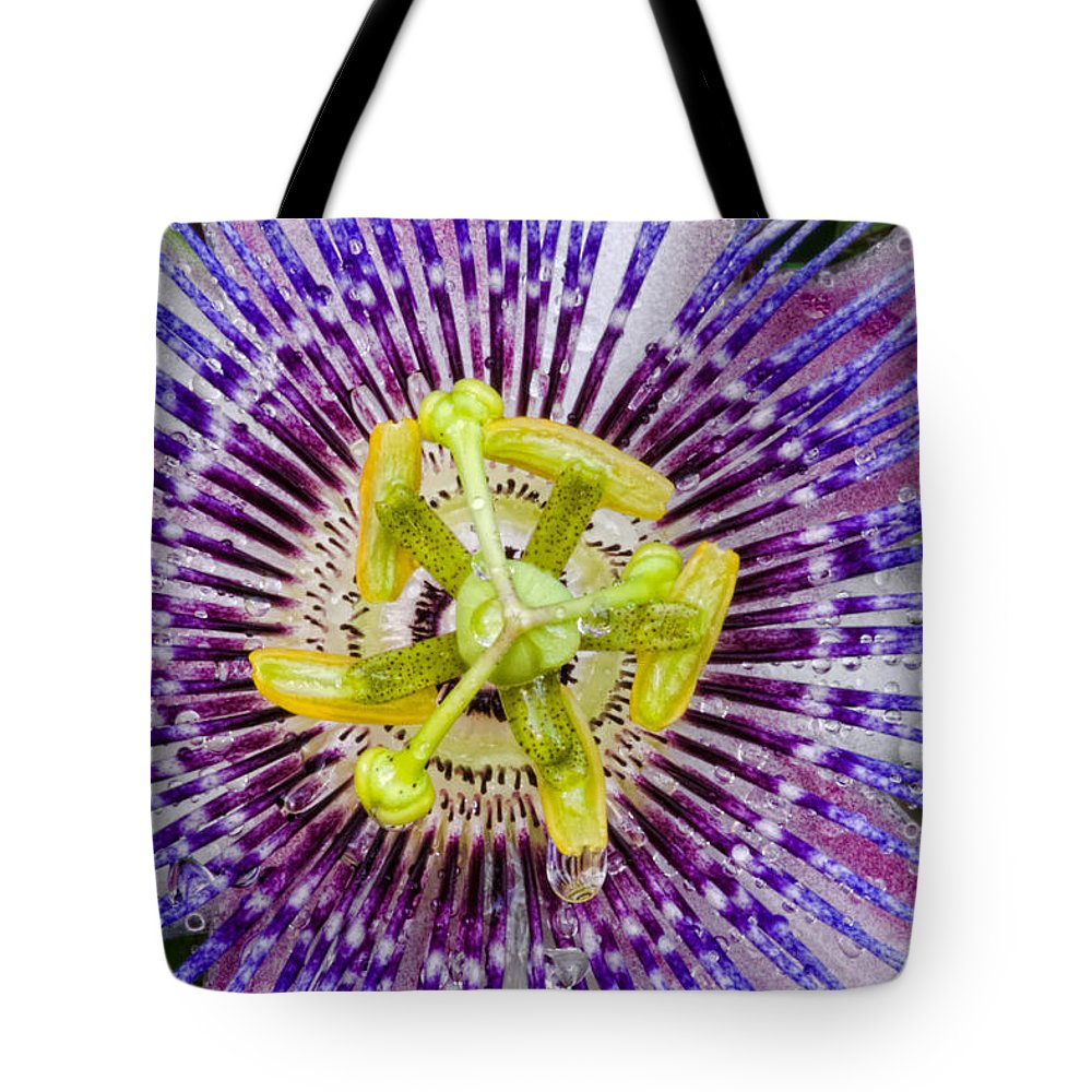 Passion Tote Bag featuring the photograph Purple Radial by Christopher Holmes
