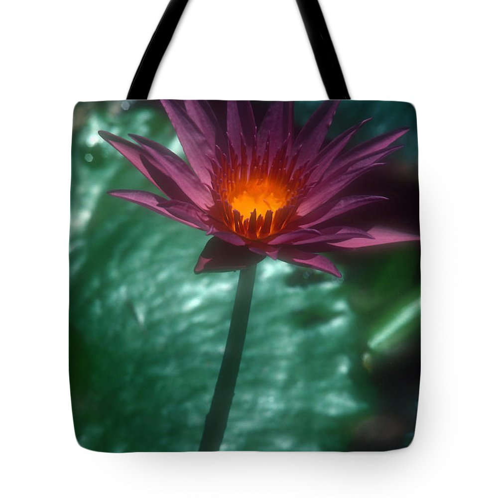 Flower Tote Bag featuring the photograph Purple Water Lily by Stephen Anderson
