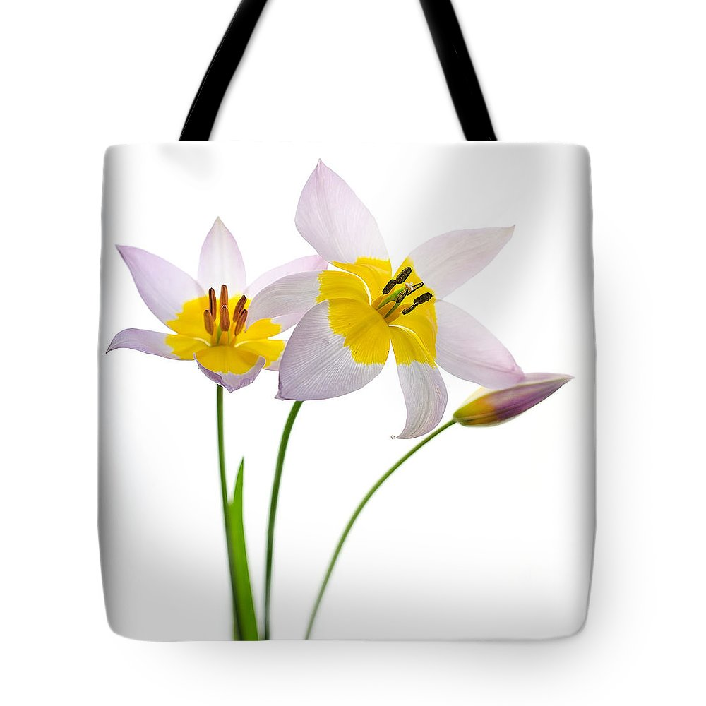 Copyright 2016 Rebecca Cozart Tote Bag featuring the photograph Purple Yellow Tulips 1 by Rebecca Cozart