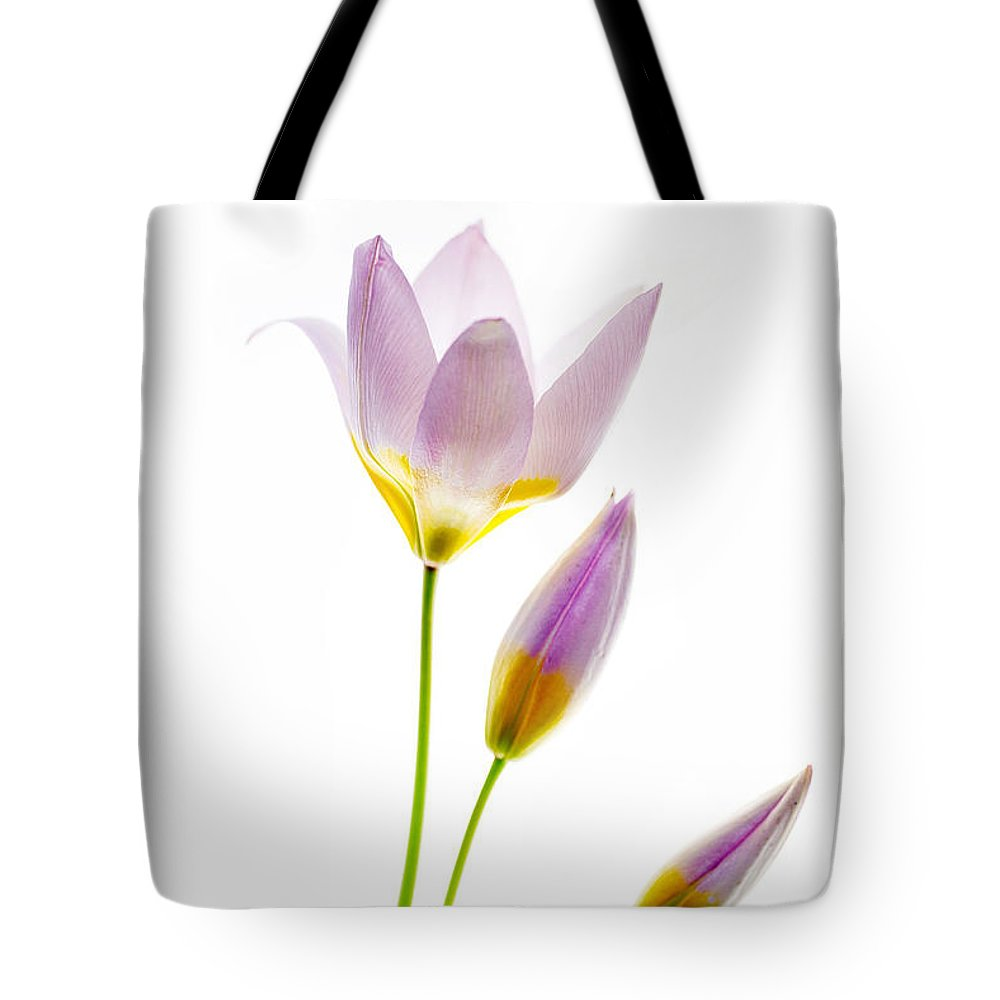 Copyright 2016 Rebecca Cozart Tote Bag featuring the photograph Purple Yellow Tulips 3 by Rebecca Cozart