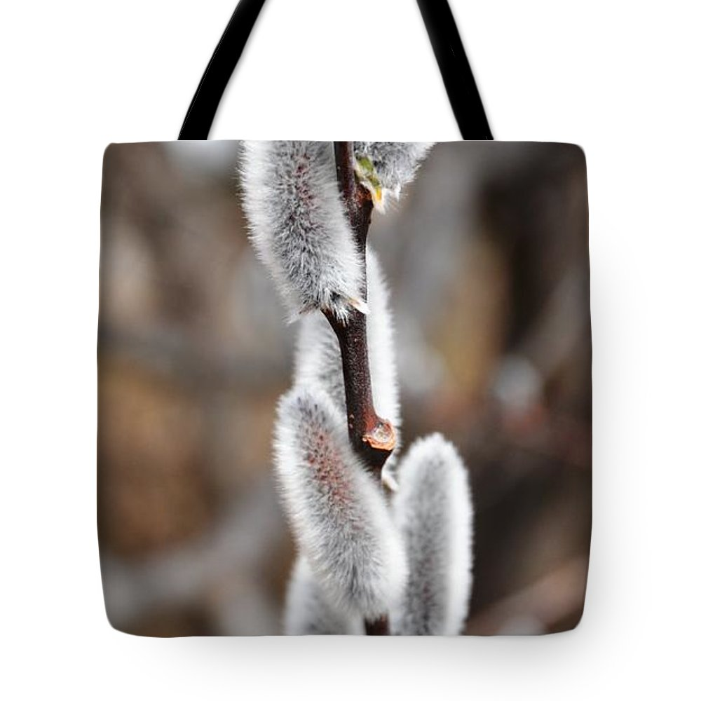 Flower Tote Bag featuring the photograph Pussy Willow 1 by Rich Bodane
