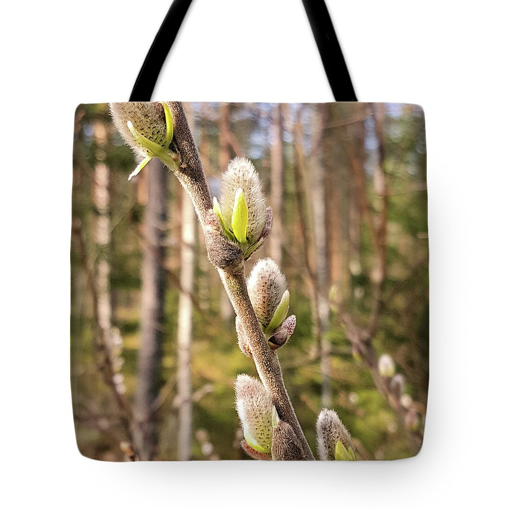 Pussywillow Tote Bag featuring the photograph Pussy Willow by Barry King