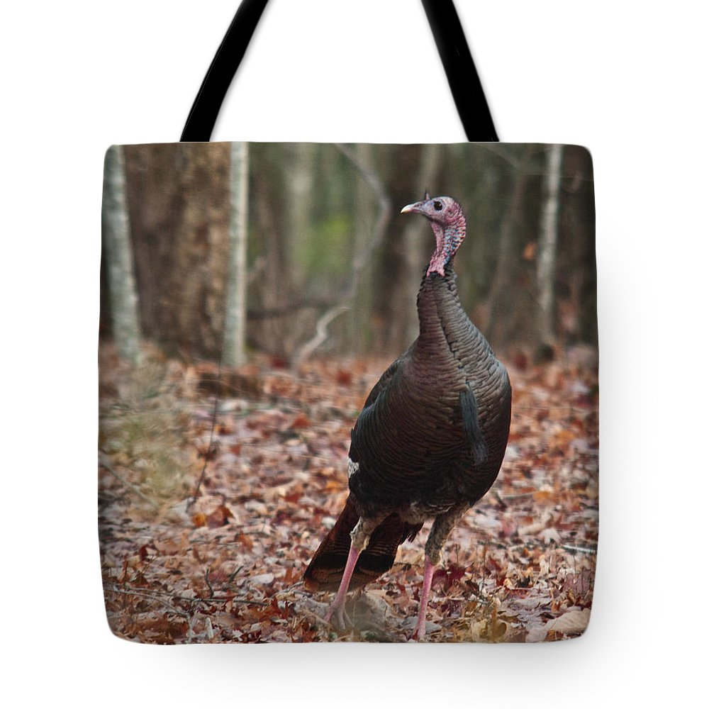 Turkey Tote Bag featuring the Questioning Wild Turkey by Douglas Barnett