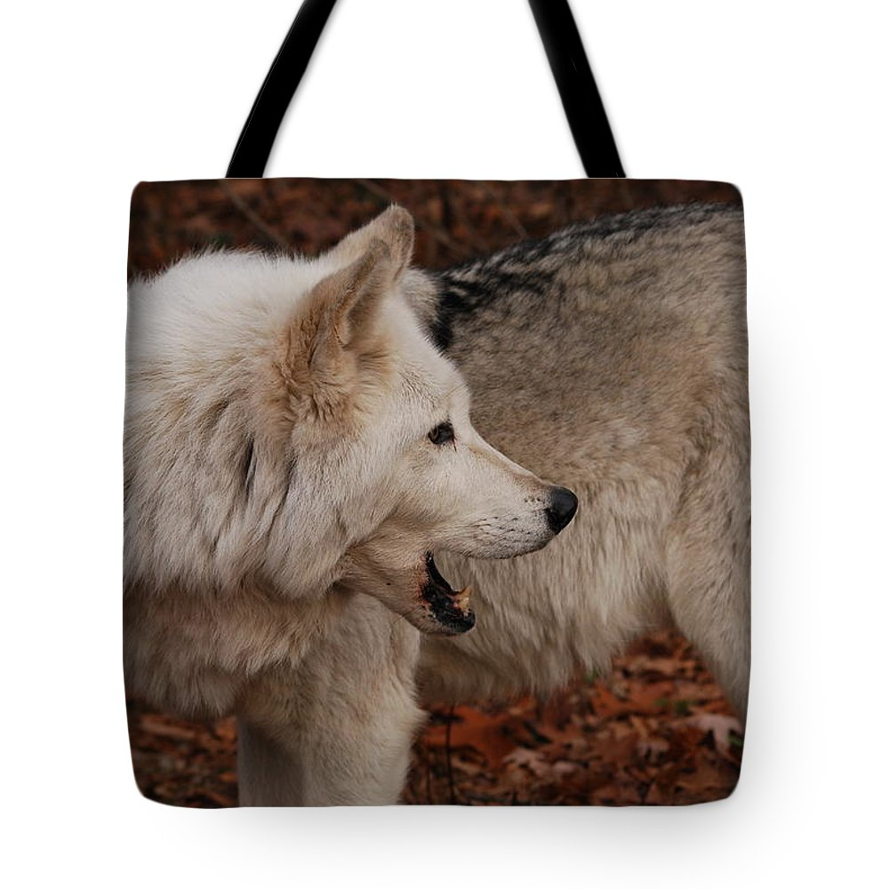 Wolf Tote Bag featuring the photograph Quiet Back There by Lori Tambakis