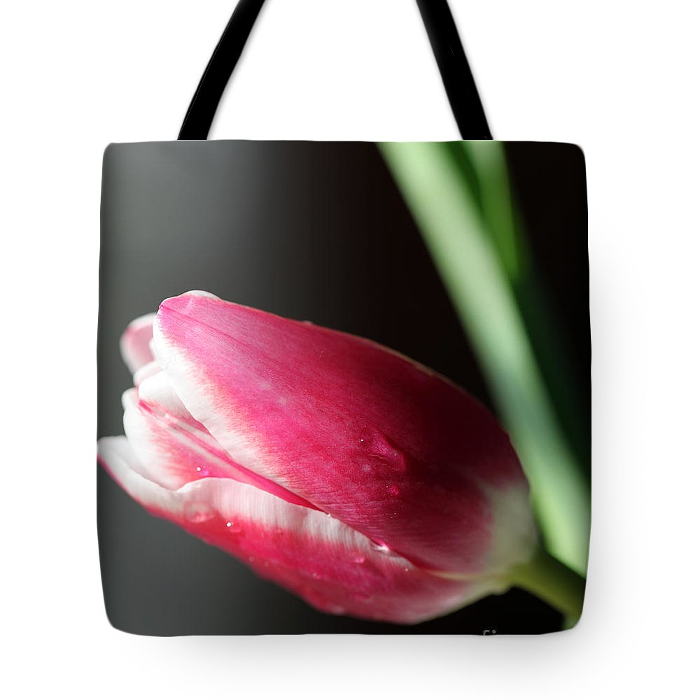 Quietly Tote Bag featuring the photograph Quietly by Amanda Barcon