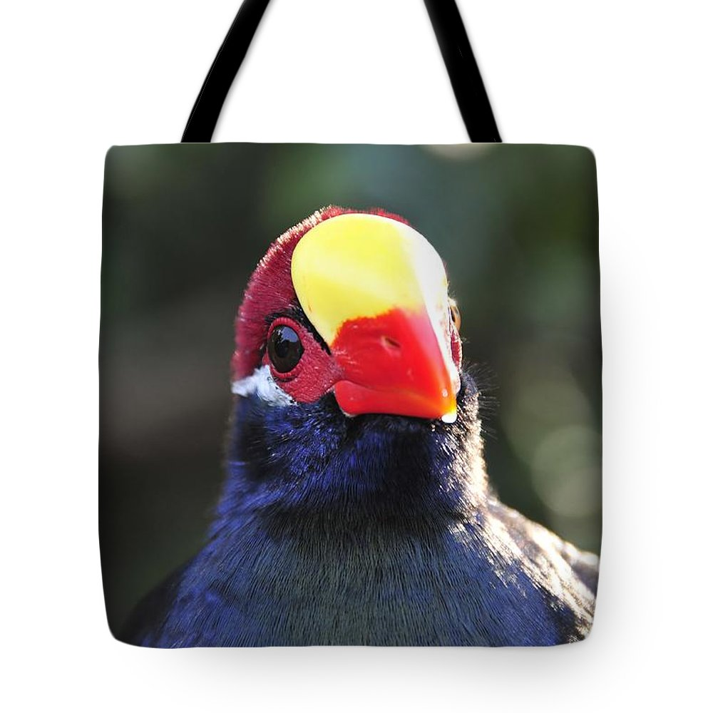 Quizzical Tote Bag featuring the photograph Quizzical Bird by David Lee Thompson