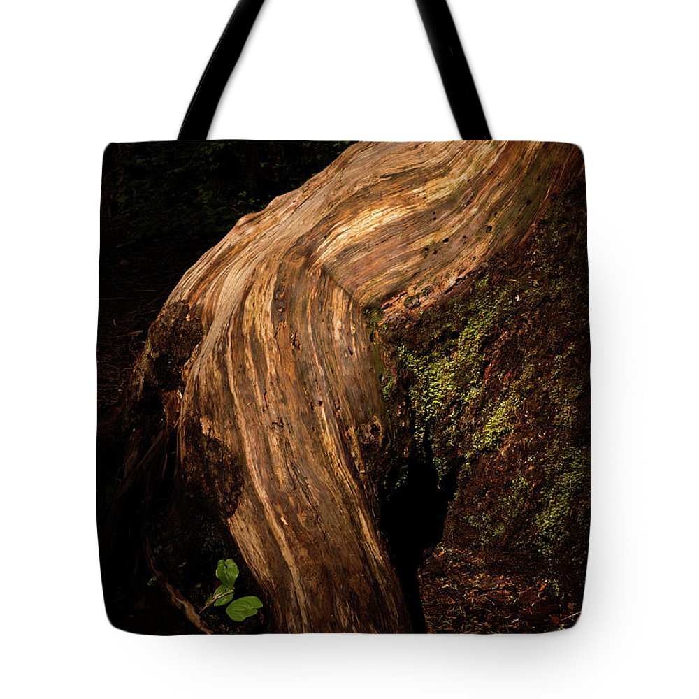 Tree Trunks Tote Bag featuring the photograph Rain Forest Light by David Lunde