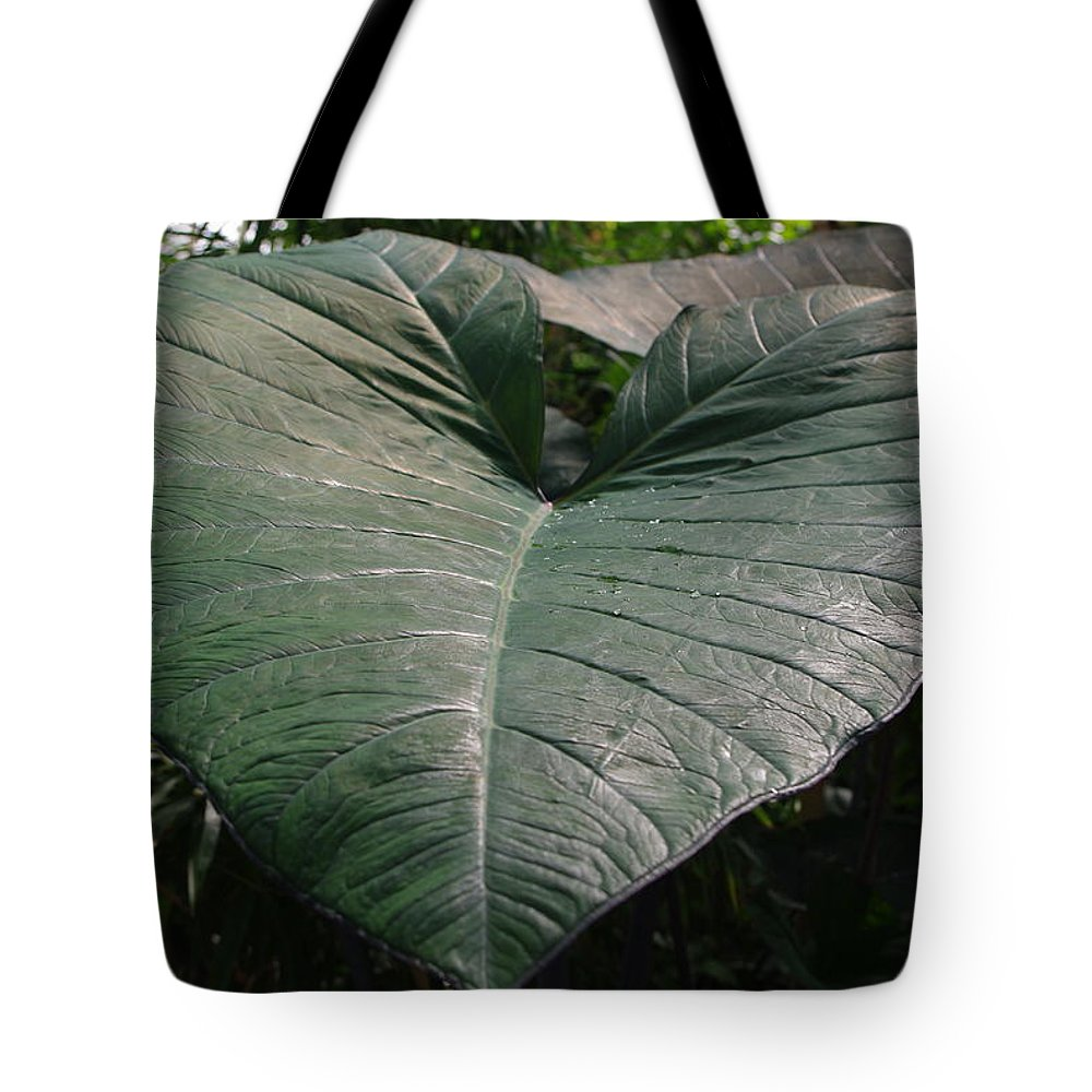 Large Leaf Tote Bag featuring the photograph Rain On Leaf by Alice Markham
