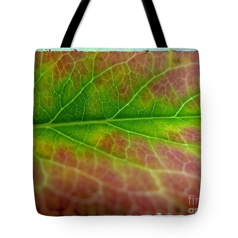 Coleus Tote Bag featuring the photograph Rainbow Coleus 1 by Jeff Breiman