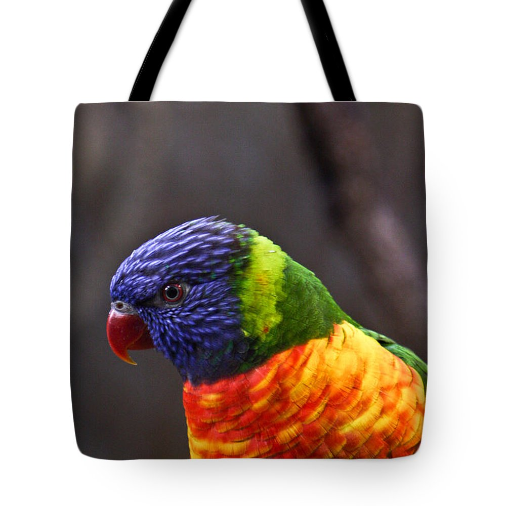 Bird Colorful Tote Bag featuring the photograph Rainbow Lorikeet by Douglas Barnett