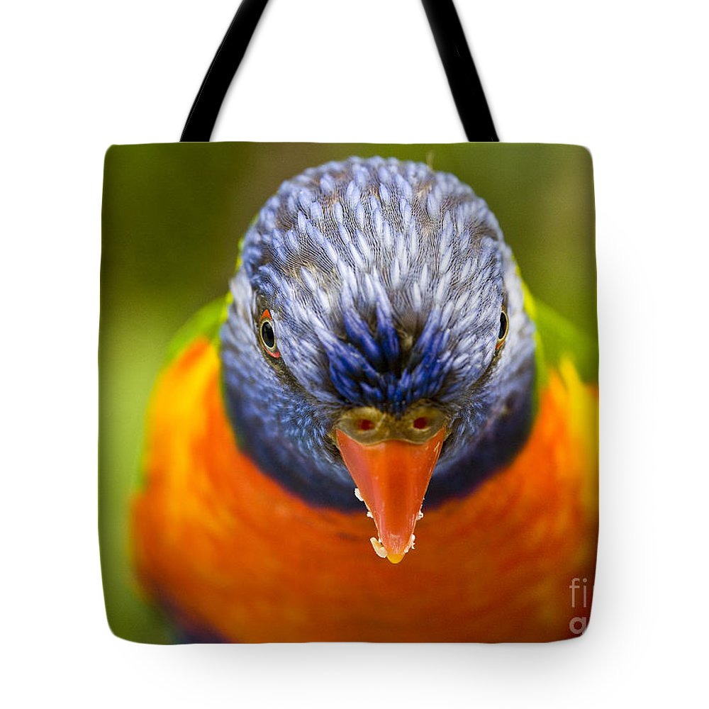 Rainbow Lorikeet Tote Bag featuring the photograph Rainbow Lorikeet by Avalon Fine Art Photography