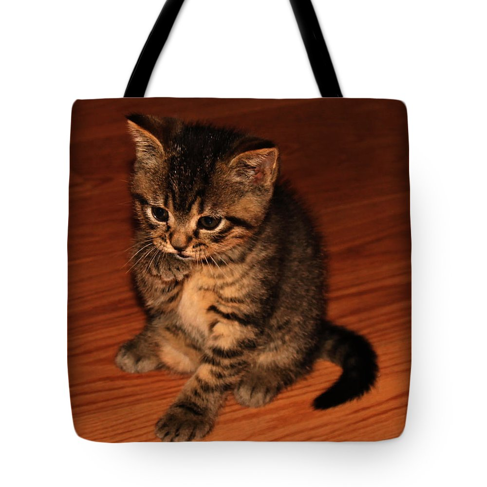 Animals Tote Bag featuring the photograph Ralphie Bathing 1 by Robert Morin