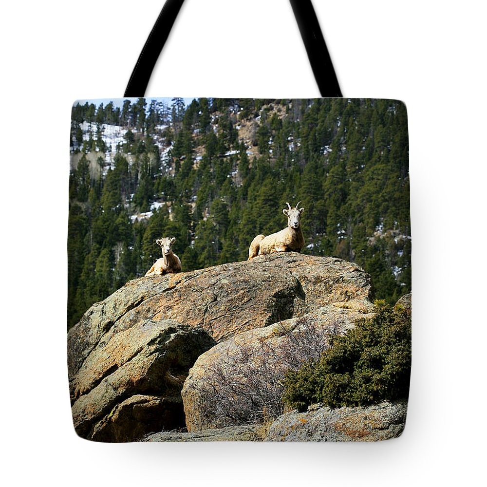 Ram Tote Bag featuring the photograph Ram On The Watch by Marilyn Hunt