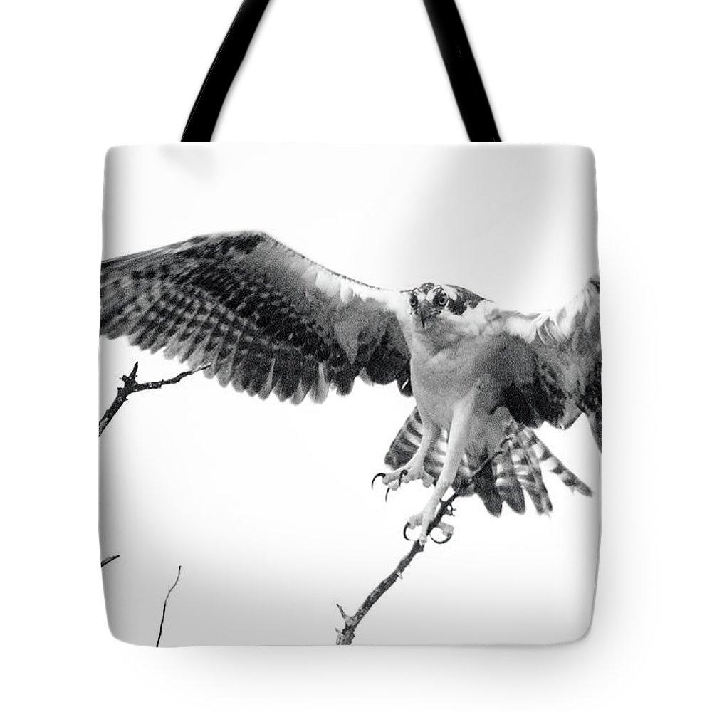 Raptor Tote Bag featuring the photograph Raptor Elite by Lamarre Labadie