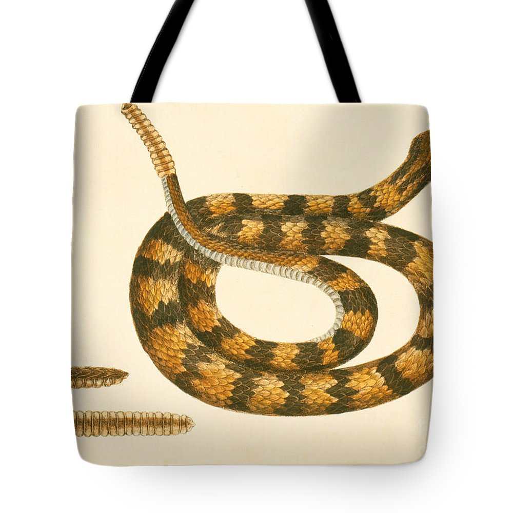Viper Caudison Snake Tote Bag featuring the drawing Rattlesnake by Mark Catesby