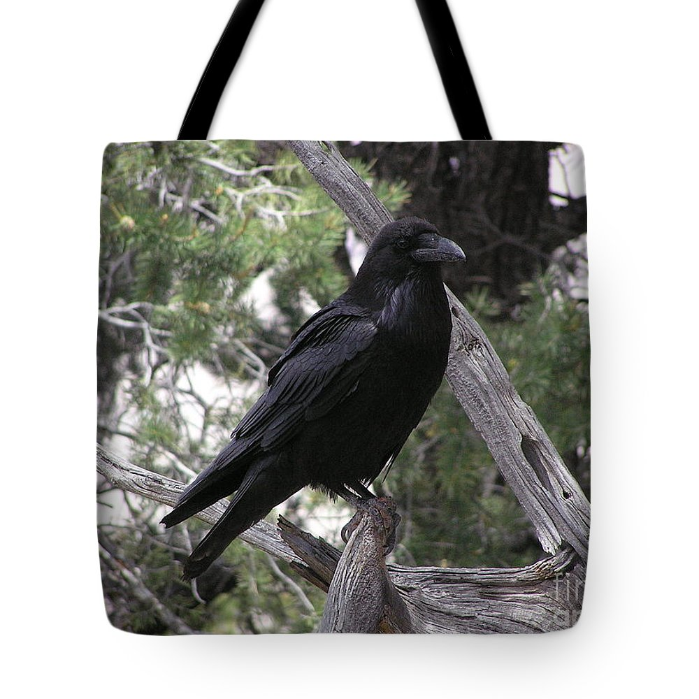 Raven Tote Bag featuring the photograph Raven by Louise Magno