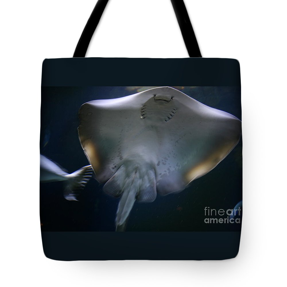 Water Tote Bag featuring the photograph Ray Of Fun by Dawn Downour