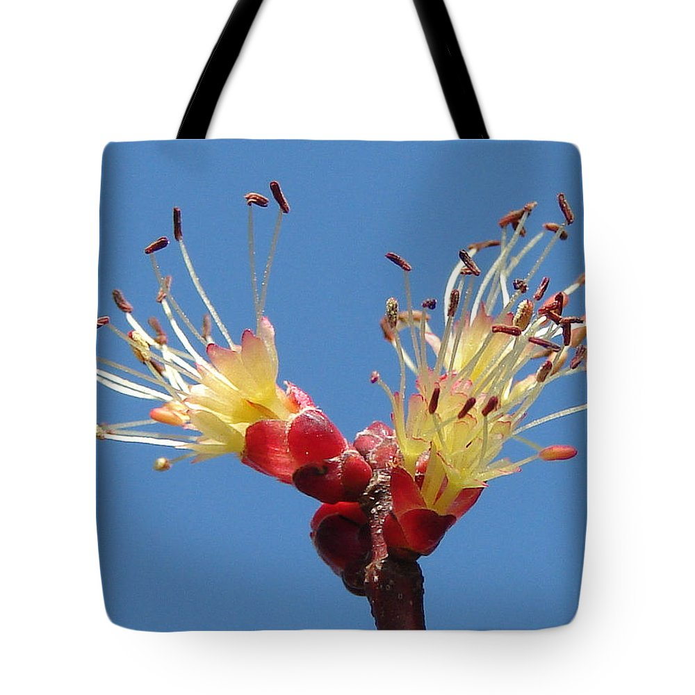 Tote Bag featuring the photograph Re-awakening by Luciana Seymour