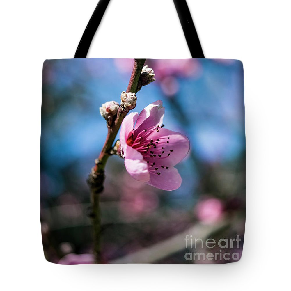 Cherry Blossoms Tote Bag featuring the photograph Reach by Cara Walton