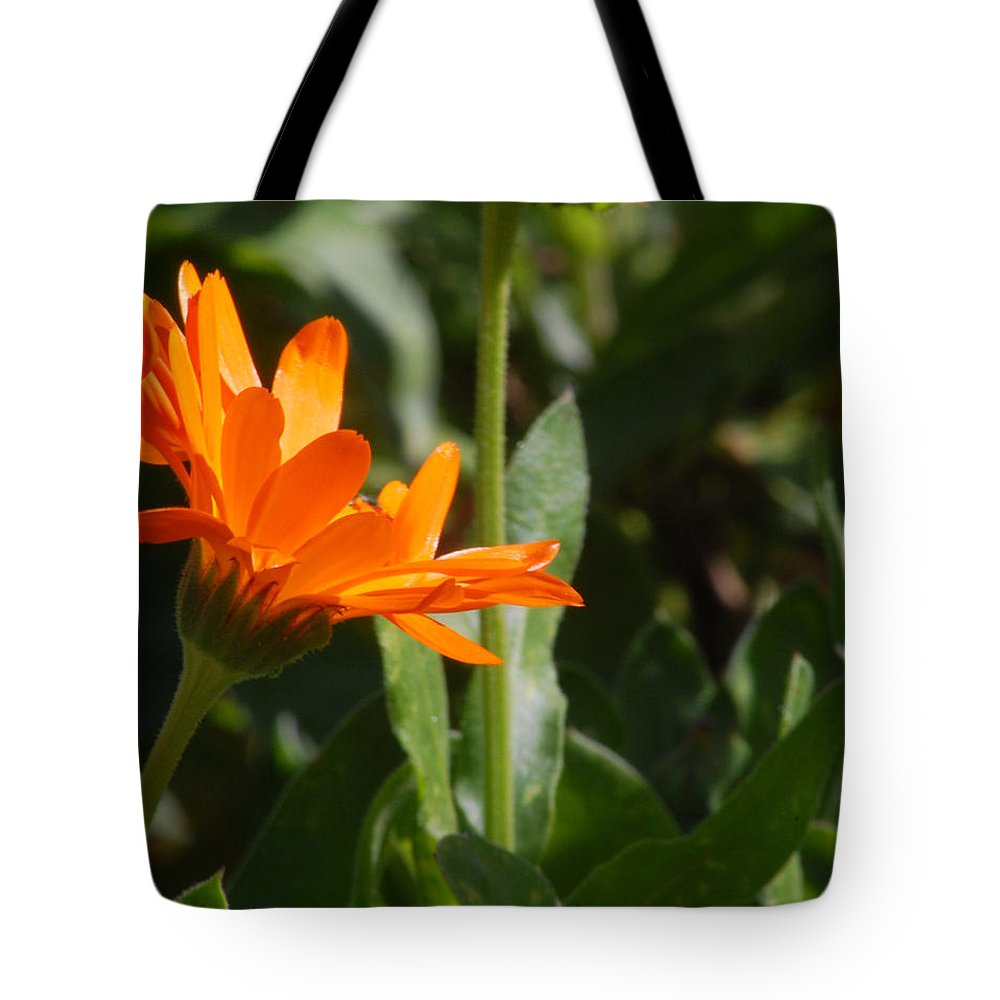 Orange Daisy Tote Bag featuring the photograph Reach For The Sun 2 by Amy Fose