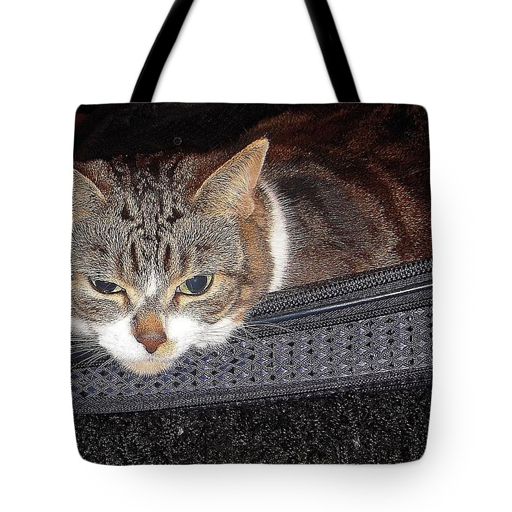 Cat Tote Bag featuring the photograph Ready For A Trip by Vesna Antic
